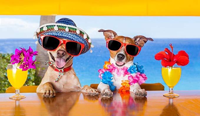 Is CBD op reis met hond en kat legaal