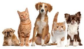 CBDolie en je huisdier