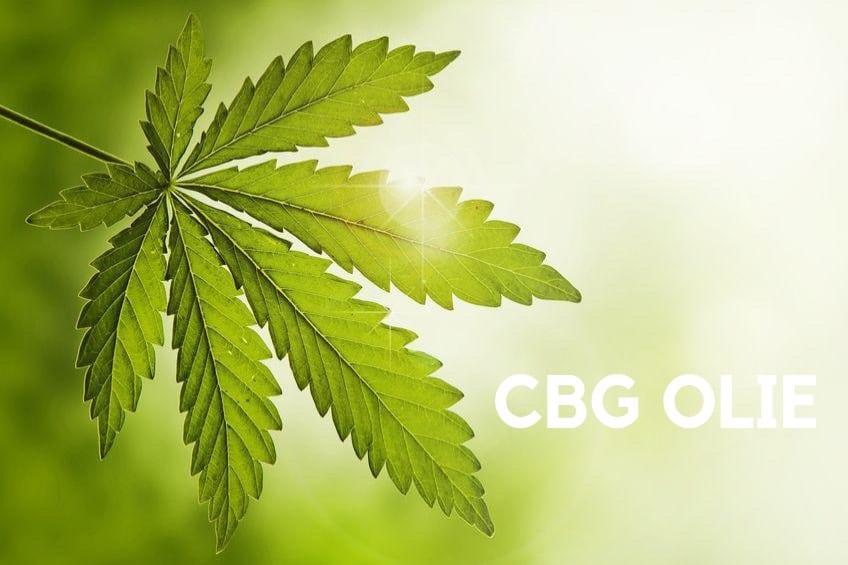 CBG olie uit de hennepplant