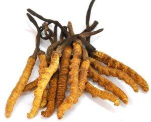 Medische fungus voor vruchtbaarheid