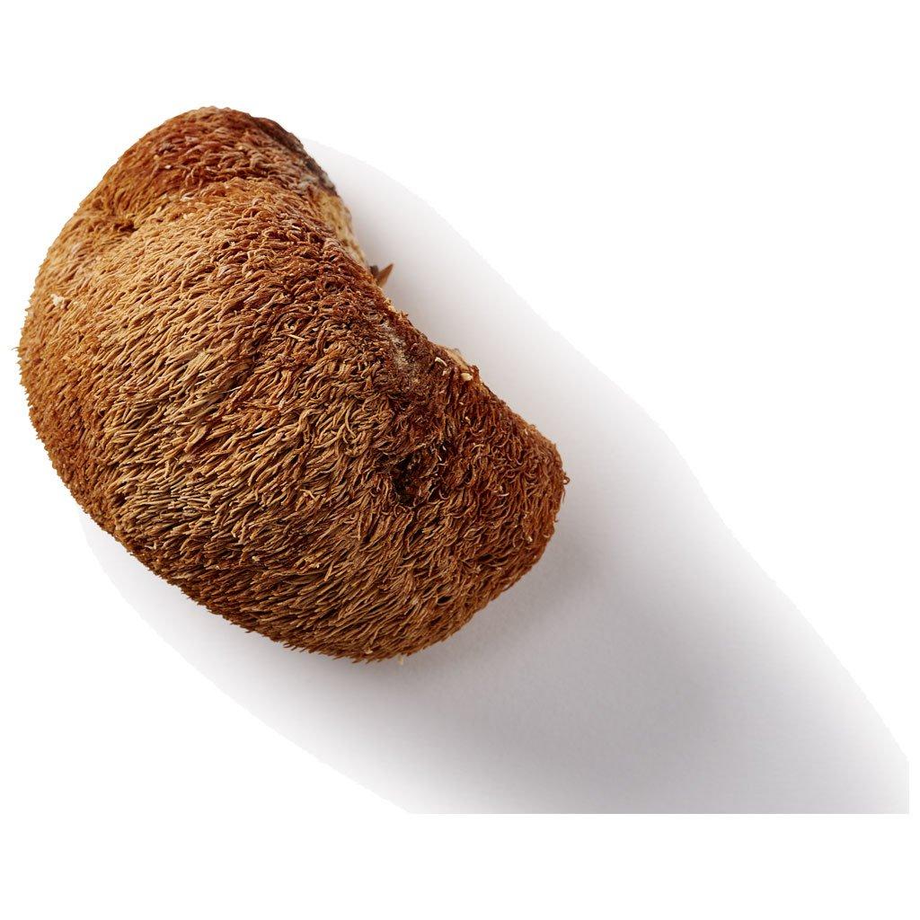Lion's Mane paddenstoel