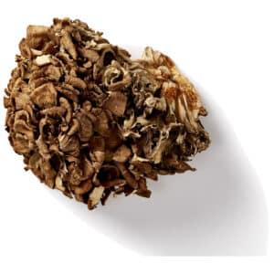 Maitake paddenstoel