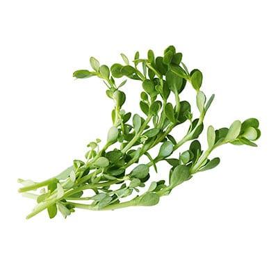 Alzheimer plantje (Bacopa monnieri)