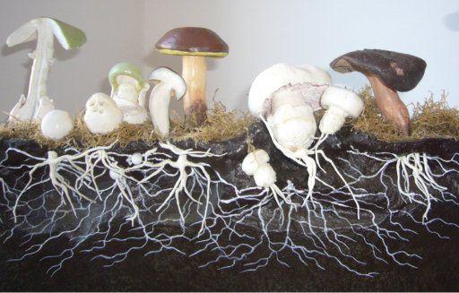 Mycelium van schimmels