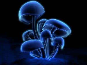 De magic mushroom