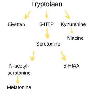 Aminozuren en lichaamseigen hormonen