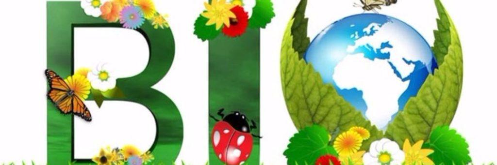 Biologische groente en fruit