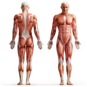 Voedingssupplementen voor gezonde spieren