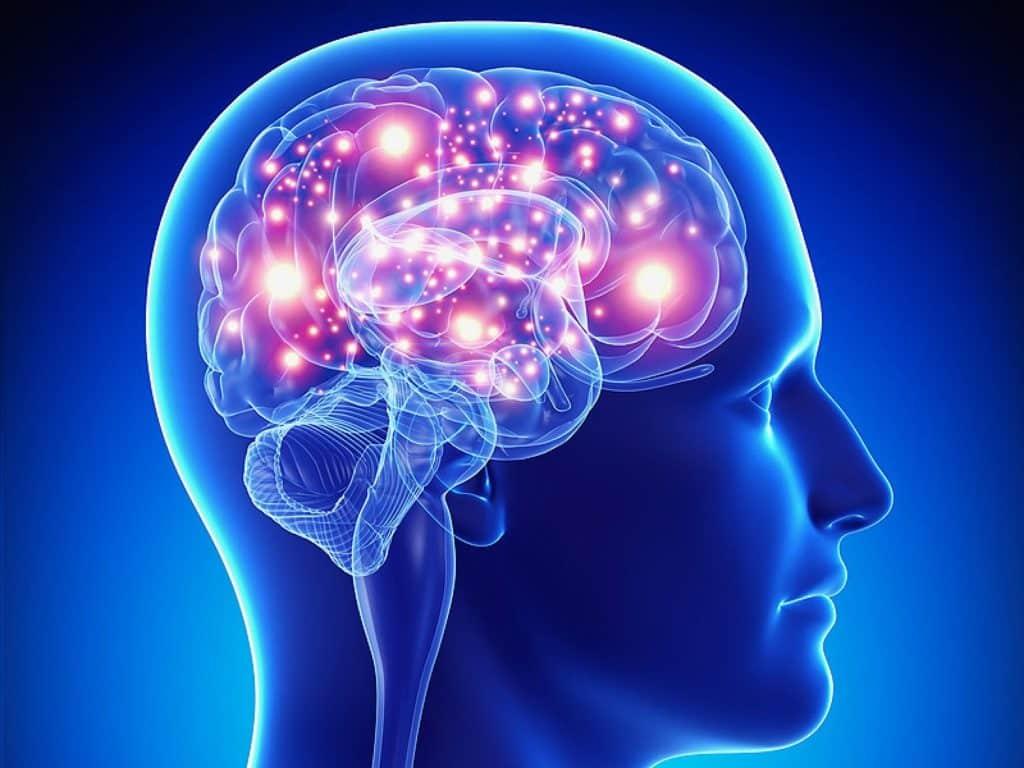 Paddenstoel voor de hersenen
